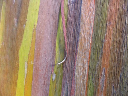 rainbowtree1