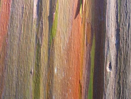 rainbowtree3
