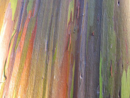 rainbowtree4