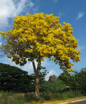 shower tree.jpg
