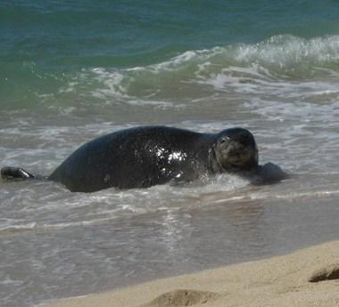 seal white plains beach copy