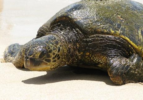 turtle june 09.jpg