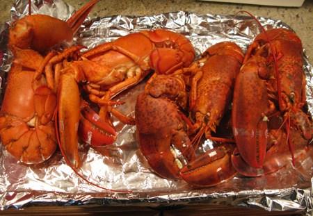 lobster kims