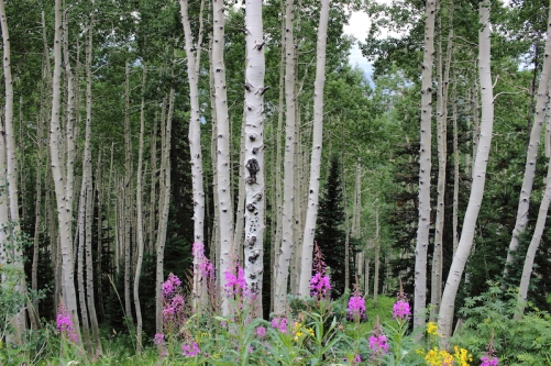 Steamboat Springs, Colorado Date: Wednesday August 03, 2016