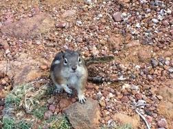 crazed chipmunk wanting food