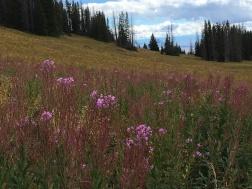 rabbit ears hike, Steamboat Springs, Colorado Date: Friday September 02, 2016