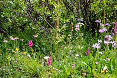 lost man trail - upper - hike Aspen side of Independence Pass, Colorado Date: Tuesday August 16, 2016