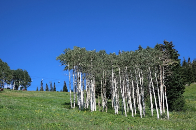 summer mountain hike - aspens Steamboat Springs, Colorado, July, 2017