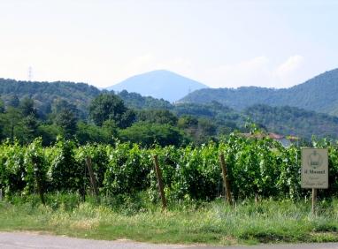 il Mosnel vigneto Italy Trip 2005, Franciacorta, Italy Date: Sunday June 26, 2005